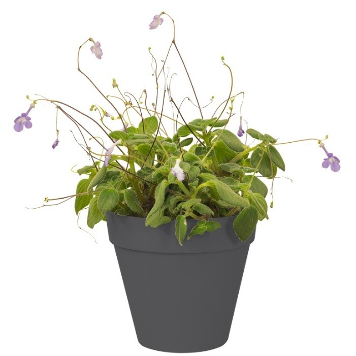 products  Small wall green pot