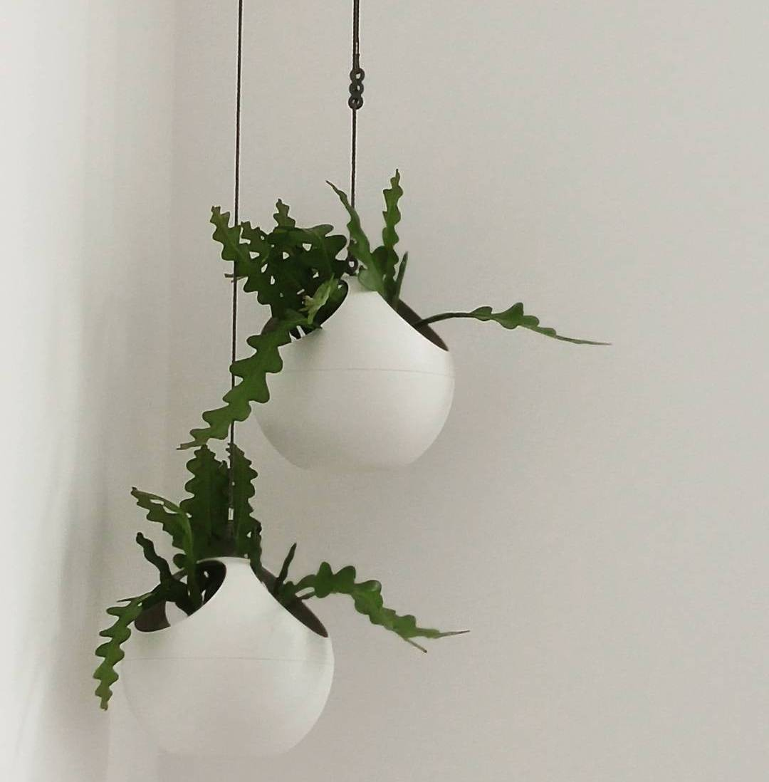 image number  11 products  Spherical pendant pot